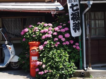 Kamakuraajisai